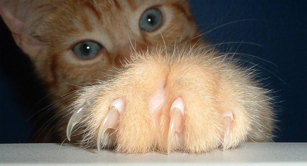 Kattekradsi lædersofa